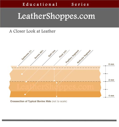 Leather Hide crosssection